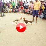 बेजुबानो की जंग बनी इंसानो का खेल