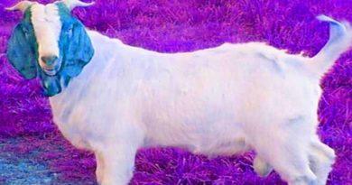 Goat dispute young man killed in barabanki
