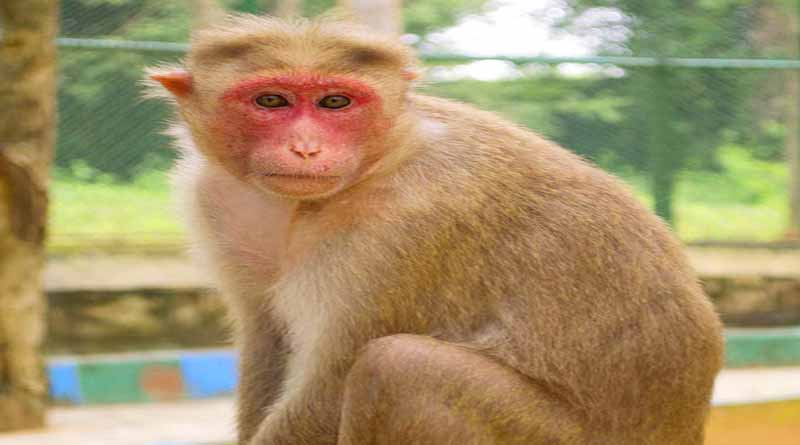 monkey killed women in ballia