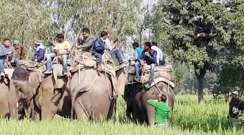 uttar pradesh pilibhit Man-eating tigers caught in this way