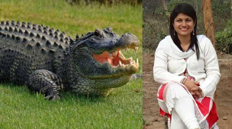 chandrakala and alligator